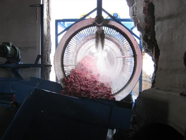 Havuç, Turp, Şalgam Yıkama Makinesi